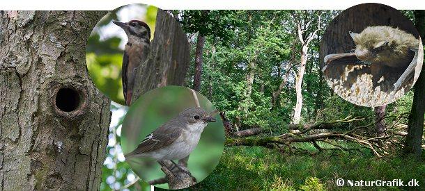 Naturskoven har med sine gamle, hule træer mange beboere. Selvom skovarealet stiger i Danmark er der mindre arealer med naturskov. Som erstatning for de manglende hule træer bruger mange arter gerne en redekasse.