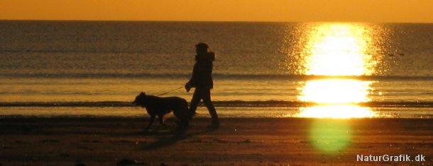 På strande skal hunde føres i snor i perioden 1. april til 30. september.