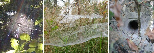 Det klassiske edderkoppenet (til venstre) som de fleste kender det. Spindets form har givet navn til bygmesterne, der kaldes for hjulspindere. Hertil hører bl.a. korsedderkoppen. Tæppespind (midt) er en anden form for edderkoppenet. Tragtspindet (til højre) er en tredie form for fangstnet. Nede i hullet sidder edderkoppen og venter.