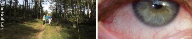 En uhyggelig elgbremse har ved flere lejligheder sprøjtet levende larver i øjnene på skovtursgæster i Sverige og Finland.