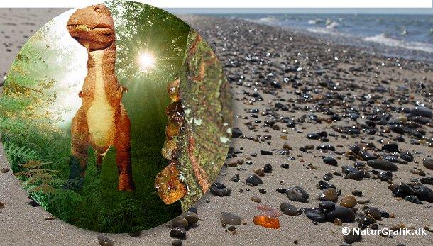 Rav er millioner af år gammelt. Noget af det rav, der findes i Danmark stammer helt tilbage fra dinosauernes tid.