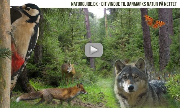 Natur i Danmark