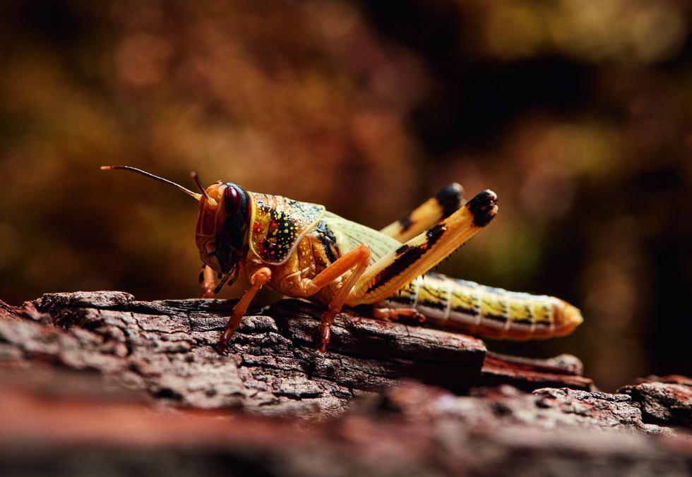 boganmeldelse1_grasshopper980