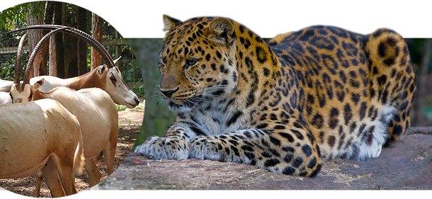 uddøde dyr liste