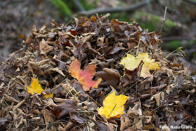 Hvis ikke regnormene formåede at omsætte de døde blade, ville bladene hobe sig i tykke lag, ifølge forskerne.