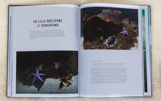 En læseværdig bog som sætter fokus på en stor undervandsnatur som kun de færreste giver sig selv adgang til.
