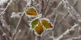 Naturen netop nu - december