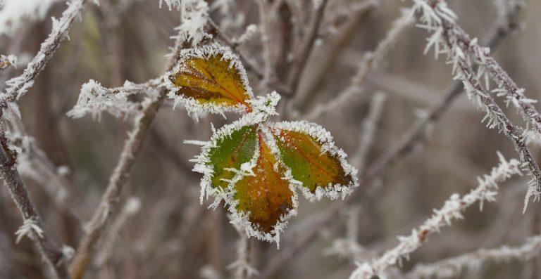 Naturen i december