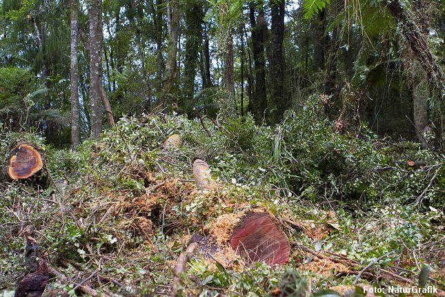 Ny undersøgelse viser at jorden huser 7 gange flere træer end hidtil antaget.