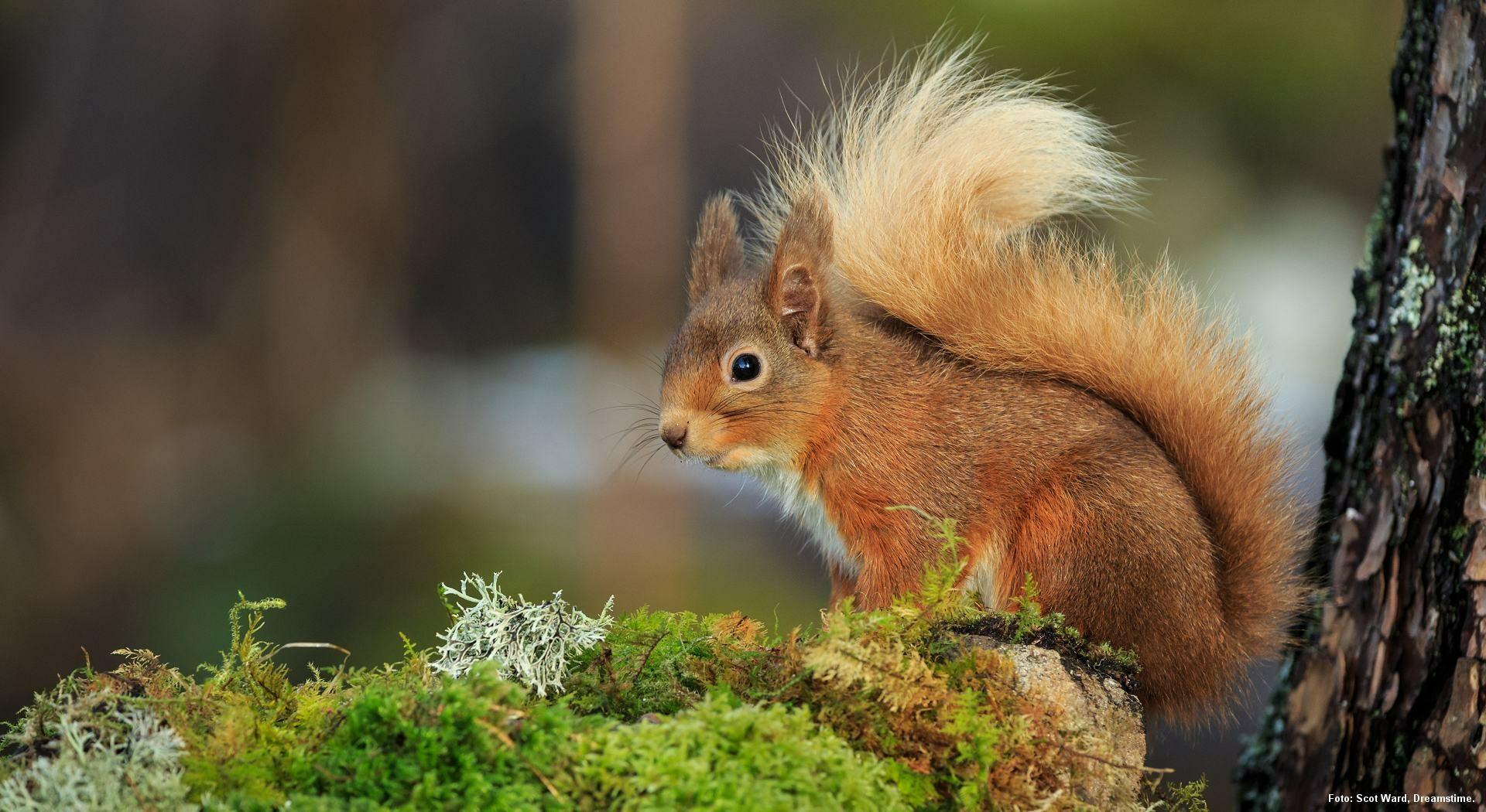 Egern. Foto: Scot Ward