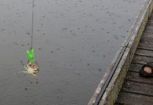 Fang krabber ved kysten