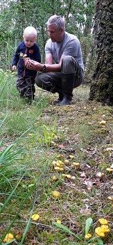 Far lærer sønnike om kantareller. Selvom der umiddelbart ingen farlige forvekslingsmuligheder er når det gælder kantareller, skal man altid være sikker når der samles svampe.