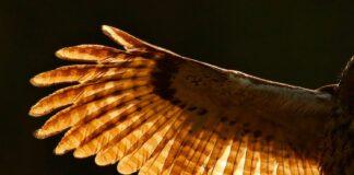 Fuglefjer