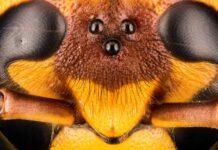 Nu vågner dronningehvepsen!
