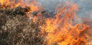 naturbrand