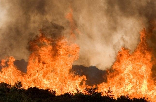 Skovbrænde hærger Borneo. Foto: Elias Gomez, Dreamtimes.com