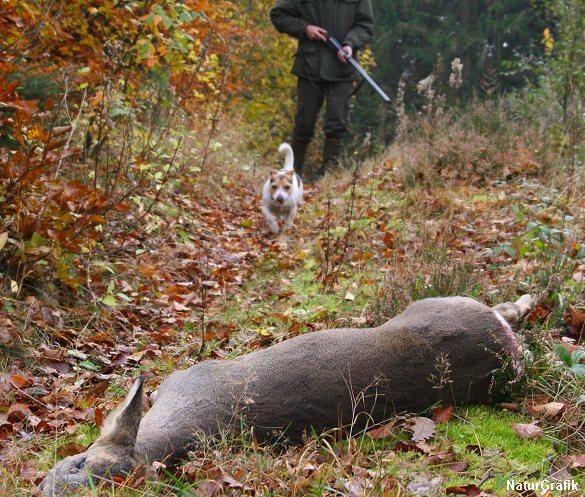 Danske jægere medlagde i forrige jagtsæson knap 2,4 mio. stykker vildt. Det er en fremgang på ni procent i forhold til den foregående sæson.