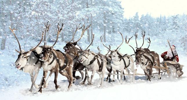 Julemanden med sine rensdyr gennem skoven. Foto: Vladimir Melnikov, Dreamstime.com og NaturGrafik.dk