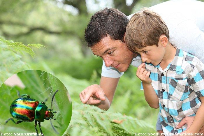Foråret er fyldt med dyreliv - og masser af spændende krible-krable-liv.