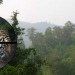 Ulovlig jagt på tigre