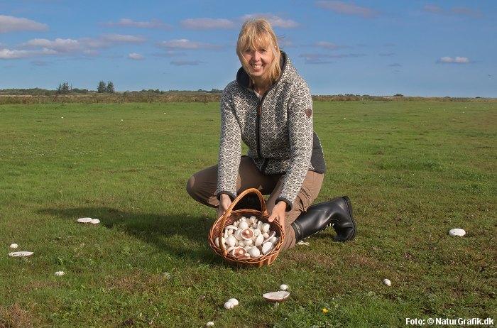 find champignon på markerne