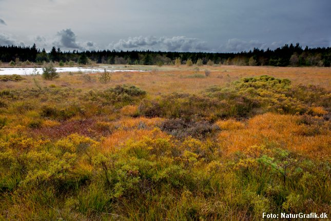 Mange, danske naturområder er truet.