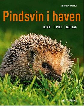 pindsvin_i_haven