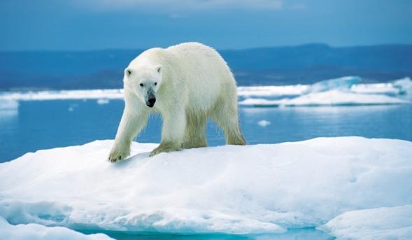Jorden oplever de største klimaforandringer siden dinosaurernes tid, ifølge forskere fra Stanford University, USA. Foto: Ansgar Walk, Wikimedia Commons.