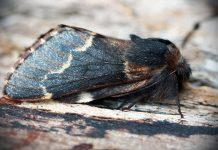 Nattens sommerfugle i vintermørket