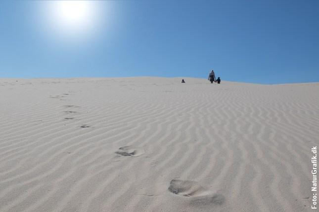 På ørkenvandring gennem Råbjerg Miles sandmasser.