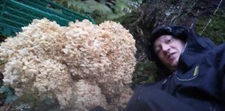 Rekordstor blomkålssvamp 13 kg