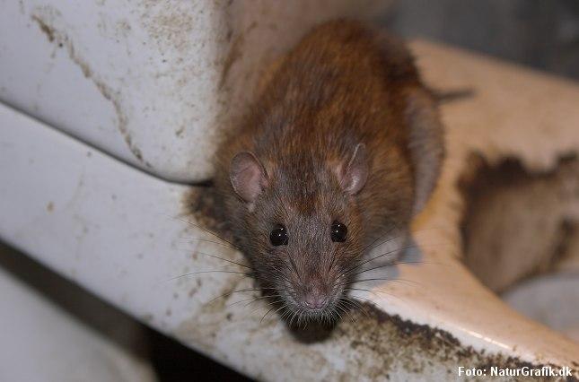 Rotter kan udvise hensyn og empati
