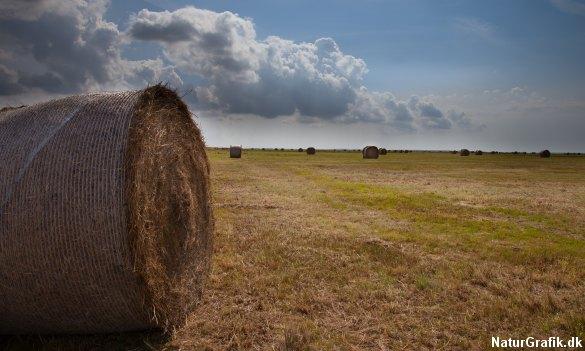 Biomasse i form af hø, presset i rundballer.