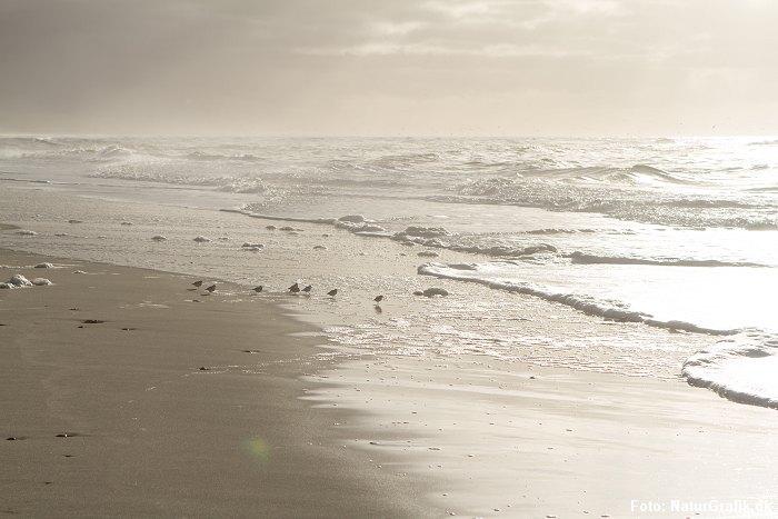 Sandløber
