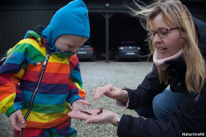 Sønnike på 2 år har fundet et par salamandere.