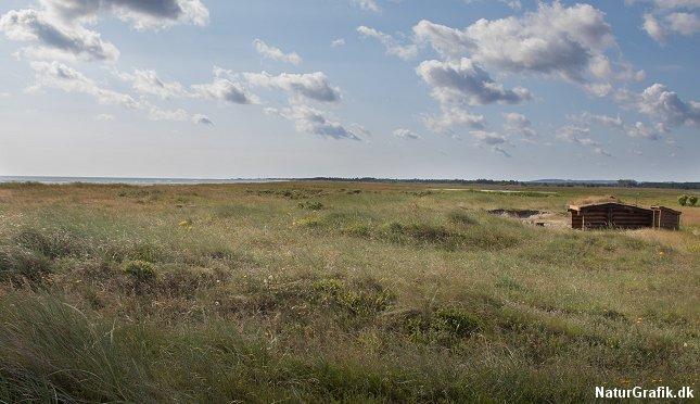 En gratis, fredfyldt shelterplads lige ned til stranden. Jerup Strand, Kattegat.