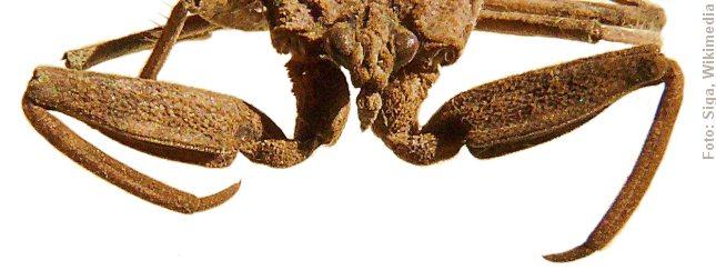skorpionstaege