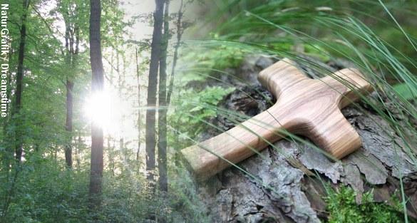 Som det første sted i landet tilbyder Odense nu muligheden for at blive stedt til hvile i skoven. Foto: NaturGrafik/Dreamstime.