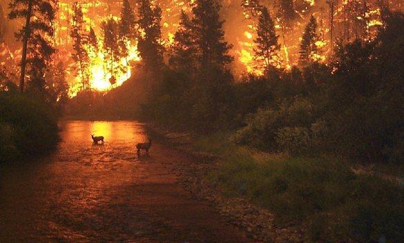 Skovbrand i Bitterroot National Forest, Montana, USA. Foto: John McColgan, Wikipedia.