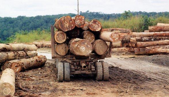 Rydning af regnskov i det centrale Afrika er faldet med 30 % siden årtusindeskiftet. Foto: JG Collomb, Wikimedia Commons.