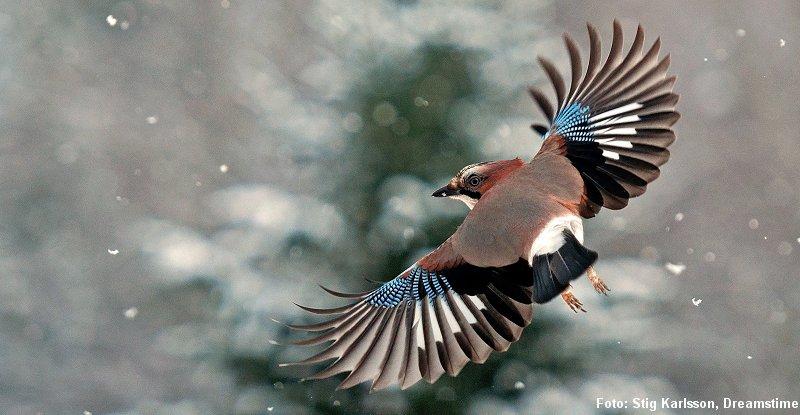 Illustreret af de bedste naturfotografer