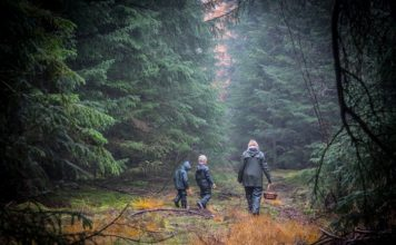 Tag i skoven og samle ind til juledekorationer.