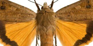 Smutuglen - et glimt af gult