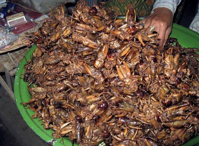 """Foto fra hæftet """"Spiselige insekter"""". Foto:"""