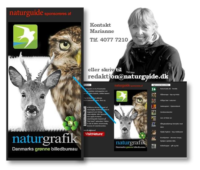 Som sponsor tilbydes du en fremtrædende eksponering i bunden af vores netmagasin.