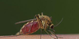 Sådan finder myggen dig