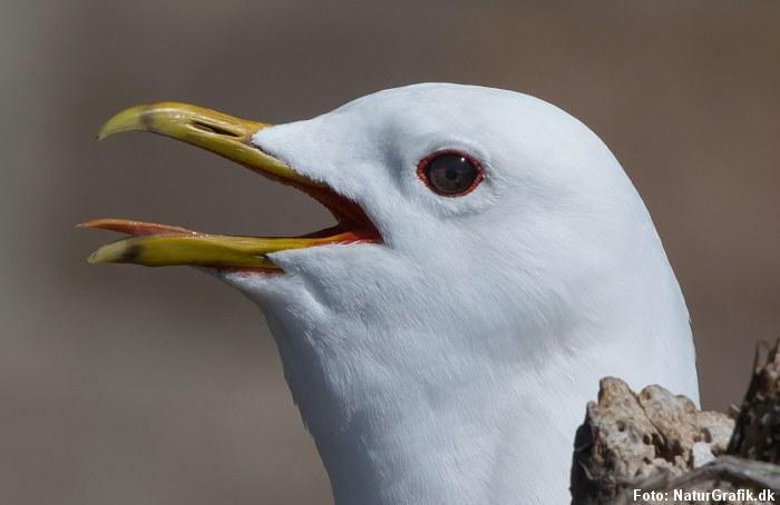 Sådan sveder fugle