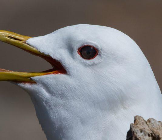 Når fugle sveder