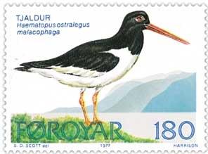 Strandskaden er Færøernes nationalfugl.