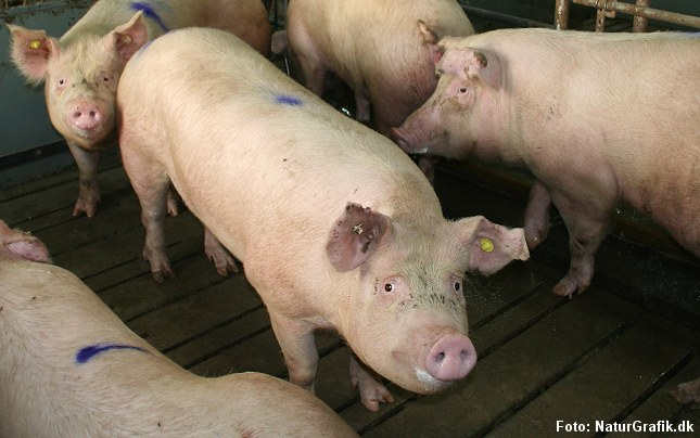 Køb med antibiotika kan ifølge kinesisk forskning give øget risiko for overvægt hos børn.